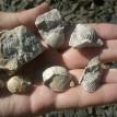 MuzeumCeskehoKrasu-hojne-nalezane-zkameneliny-z-koneprus