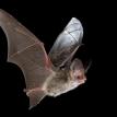 evropská noc s netopýry