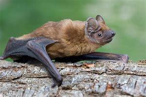 Odpoledne s netopýry